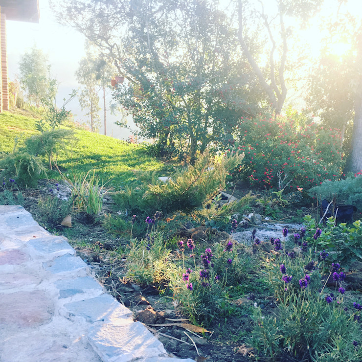 Jardín silvestre y de bajo mantenimiento Agroinnovacion paisajismo sustentable Jardines de estilo rústico