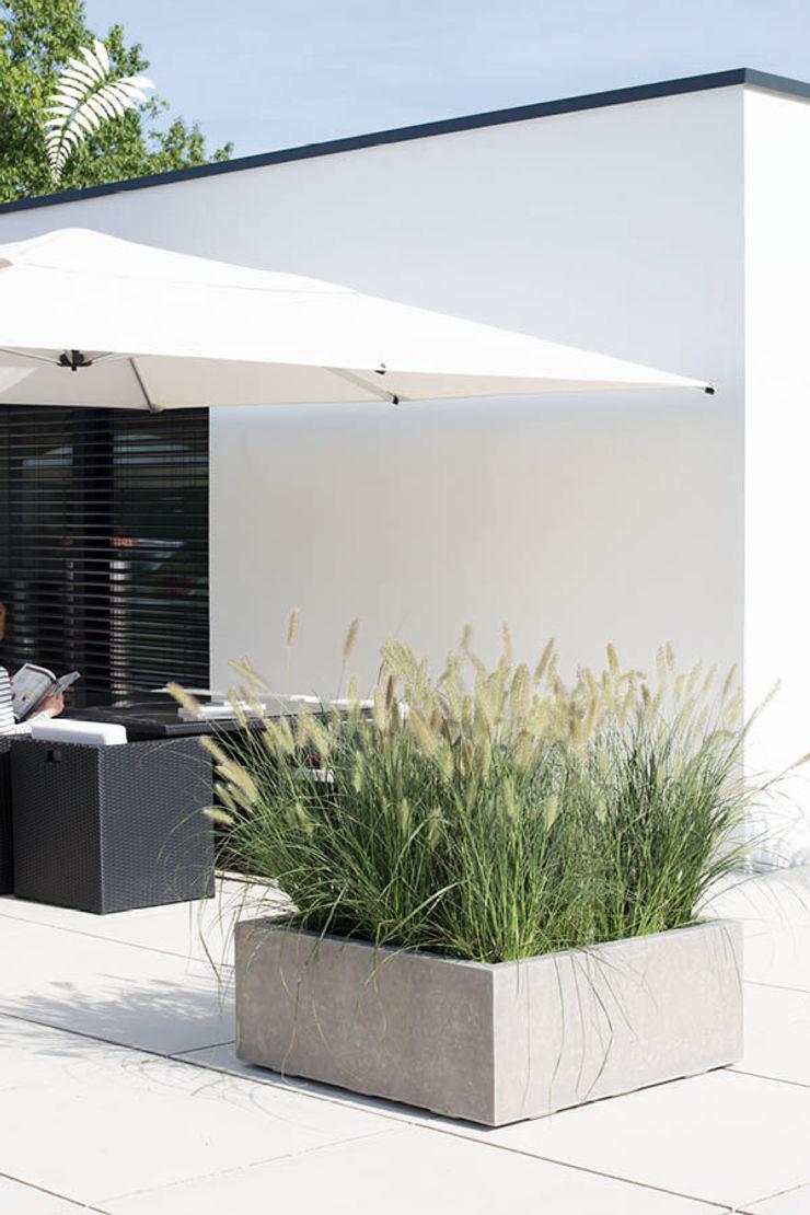 arts&more Balconies, verandas & terraces Plants & flowers Concrete Yellow