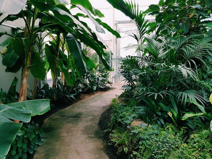 Jenis Taman Tropis Tukang Taman Surabaya - Tianggadha-art Halaman depan Batu Pasir Green