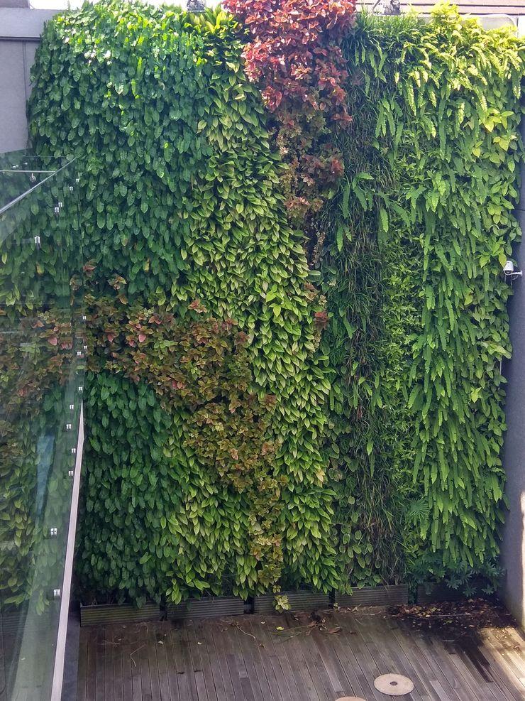 Model Taman Vertical / Vertical Garden Tukang Taman Surabaya - Tianggadha-art Halaman depan Aluminium/Seng Green