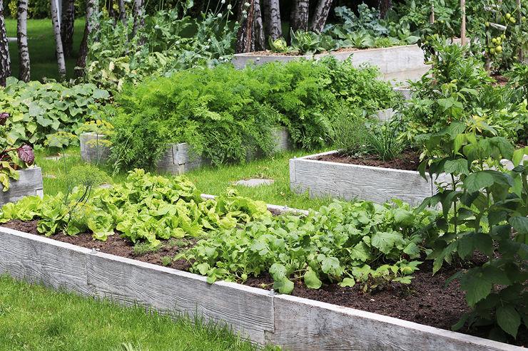 Warzywniki - Betonowe Rabaty Warzywne Garden Plants & flowers