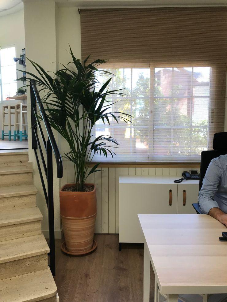 Las plantas en zona de trabajo A interiorismo by Maria Andes Hoteles de estilo mediterráneo Madera Blanco