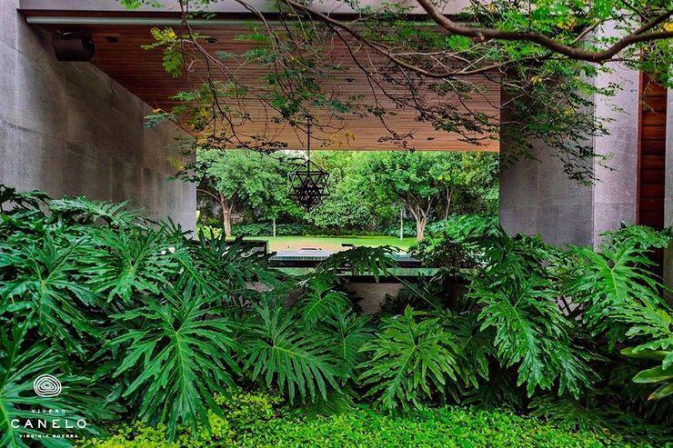 Canelo exteriores Jardins de fachada Verde