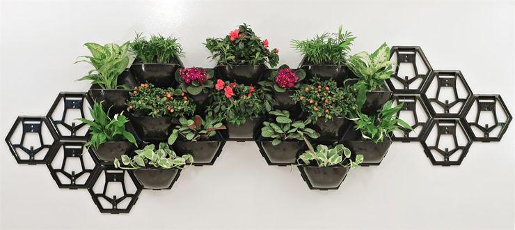 Yaşam Çiçeği Duvar Saksı Kiti silvanus dikey bahçeler BahçeBitki & Çiçekler