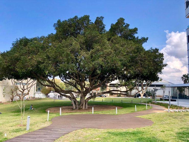 Exterpark 學校 實木