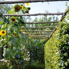 Bersò di girasoli: Giardino in stile in stile Mediterraneo di Anna Paghera s.r.l. - Green Design