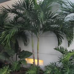 Jardin interior acceso principal.: Jardines de estilo minimalista por Camilo Pulido Arquitectos