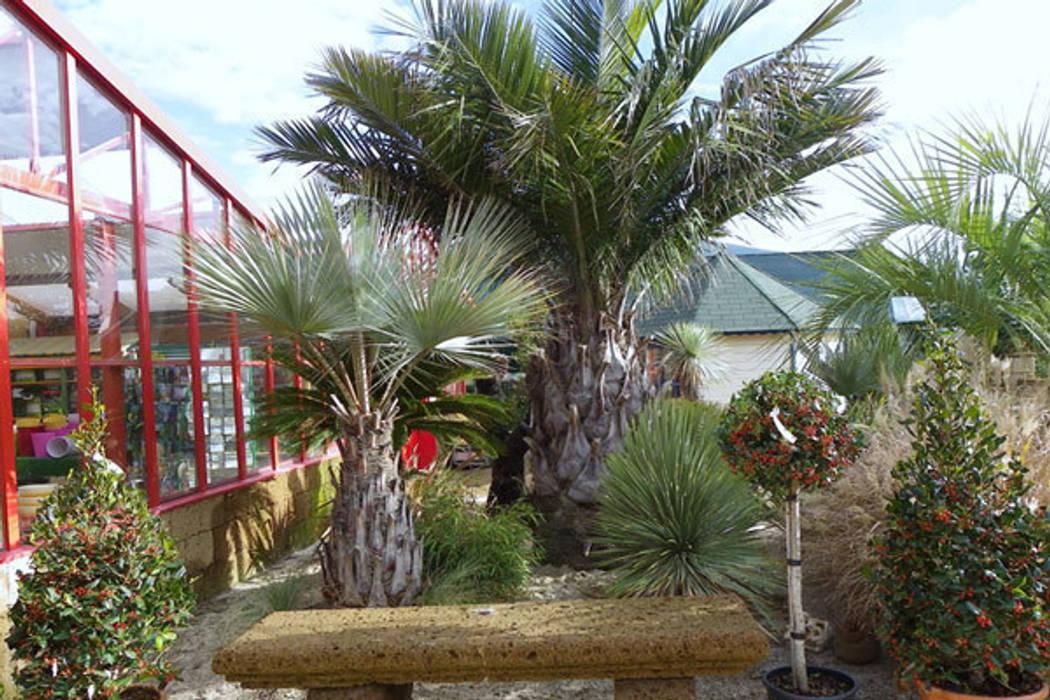 Fotos de jardines de estilo moderno viveros rucat - Viveros de madrid ...