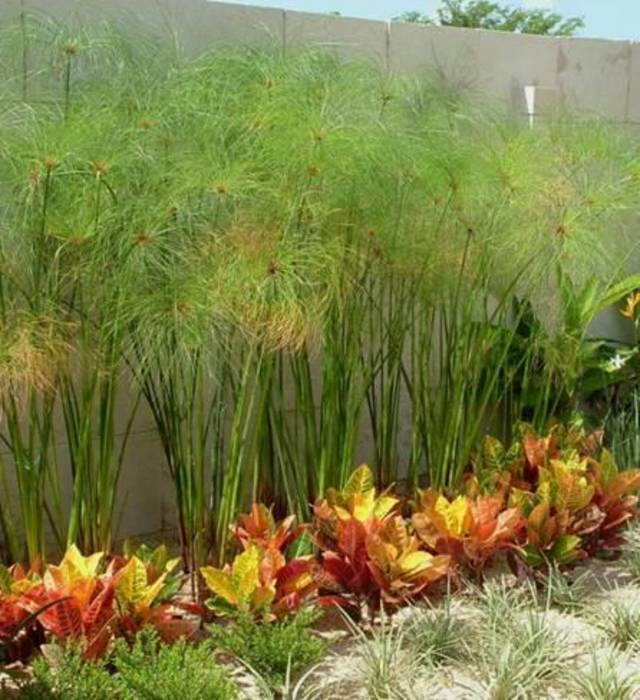 Fotos de jardines de estilo moderno casa wkt homify for Paisajismo en jardines de casas