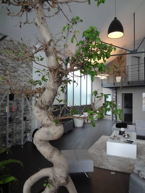 gr ner wird s nicht pflanzen in szene setzen. Black Bedroom Furniture Sets. Home Design Ideas