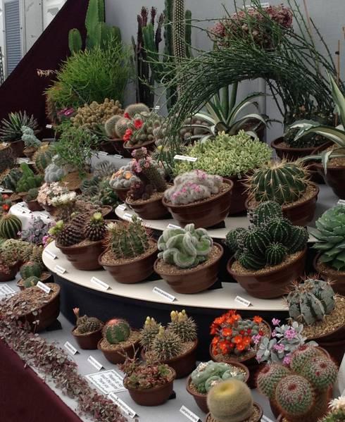 klassischer Garten von Craig House Cacti