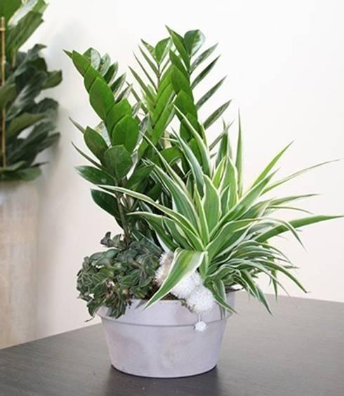 Le piante da interno che resistono senza la luce naturale - Piante verdi interno ...