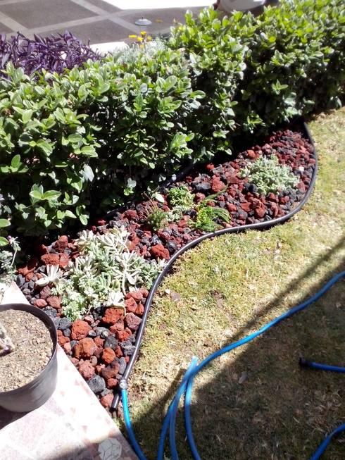 17 jardines en miniatura s per f ciles de copiar en casa for Klein tuin uitleg