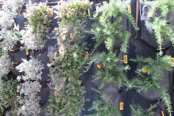 Jardines hasta en la pared for Jardin vertical de fieltro en formato kit