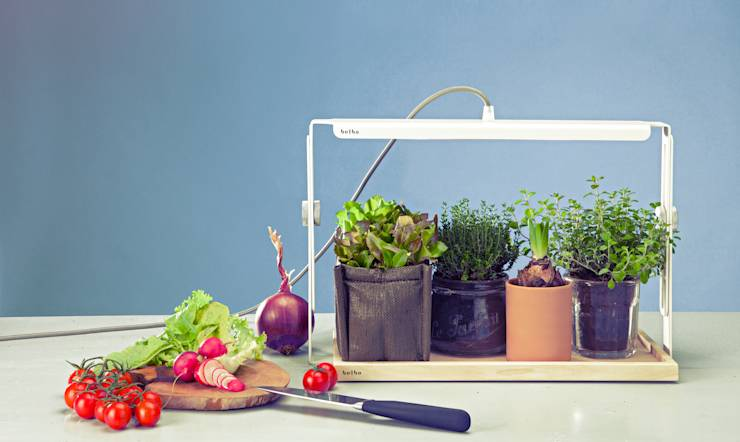 Comment faire pousser ses propres plantes aromatiques - Comment faire pousser du basilic ...