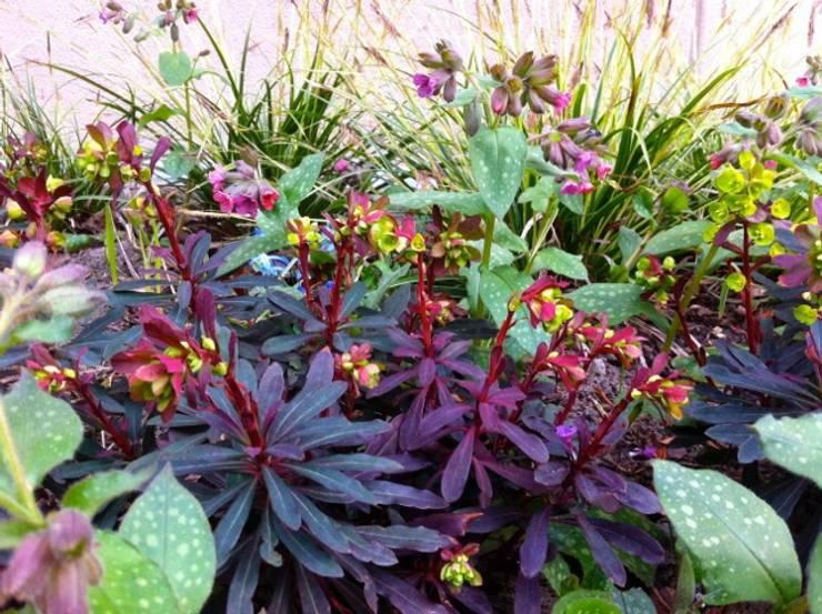 10 ideen f r den vorgarten - Japangarten pflanzen ...