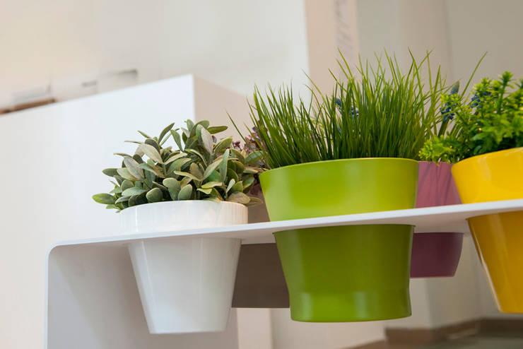 Las mejores plantas de interior - Las mejores plantas de interior ...
