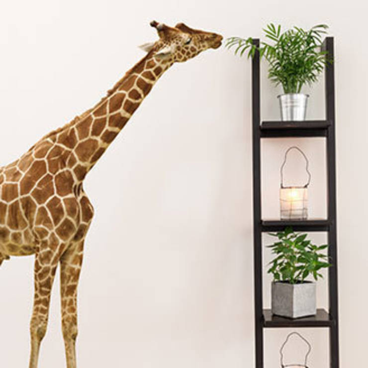 wandtattoos kreative wandgestaltung ohne n gel farbklekse von homify. Black Bedroom Furniture Sets. Home Design Ideas