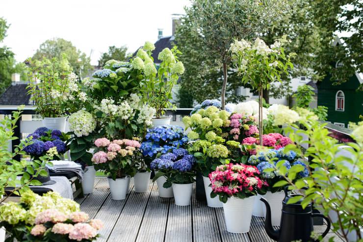 Giardino in stile In stile Country di Pflanzenfreude.de