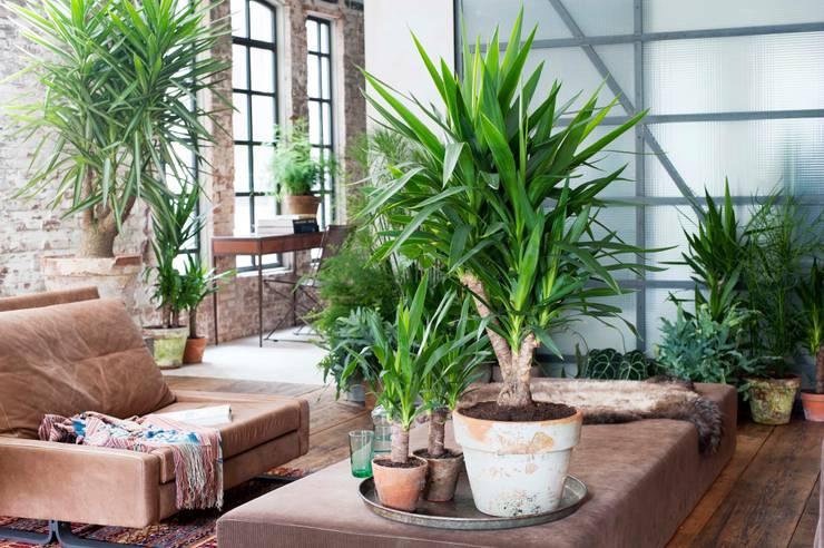 Salones de estilo industrial de Pflanzenfreude.de