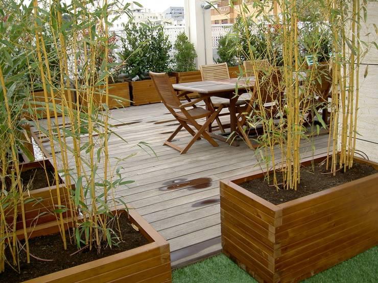 5 dise os increibles de terrazas con bamb - Bambu planta exterior ...