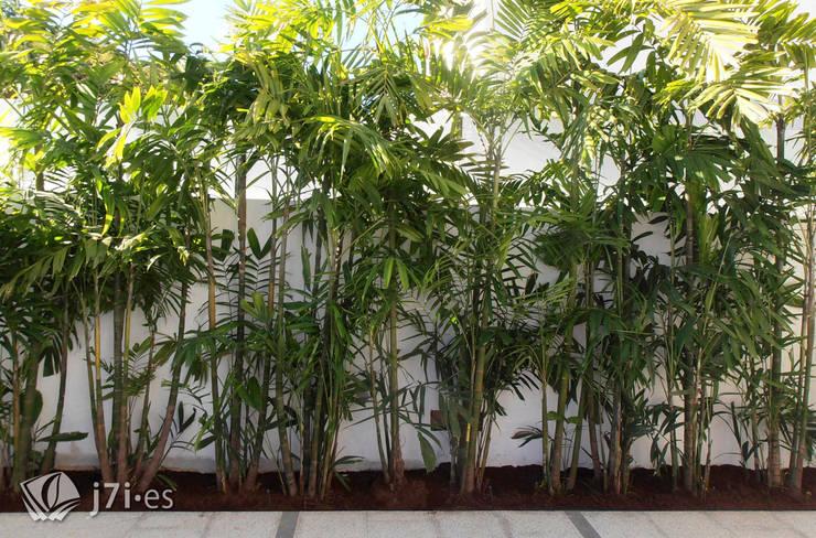 Ideas para peque os jardines for Jardines con palmeras