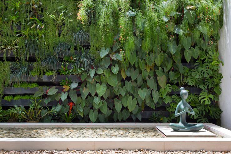 jardim vertical moderno:JArdim vertical: Jardins modernos por Amanda Miranda Arquitetura