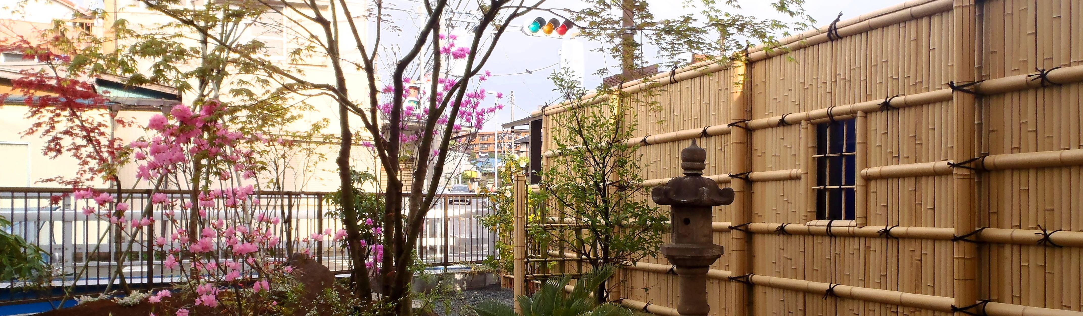 庭咲桜(にわざくら)