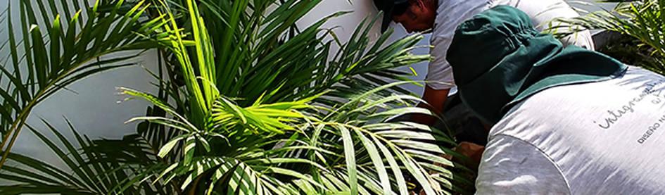 Quetzal Jardines