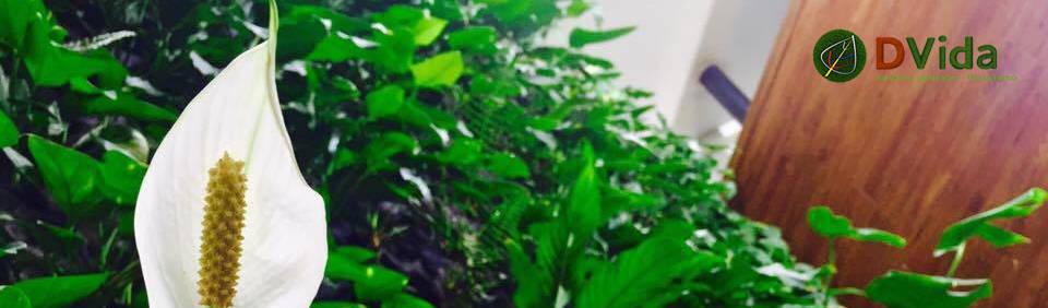 DVida Jardines verticales
