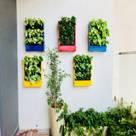 Treemendous Plants