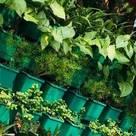 Plantsnyou