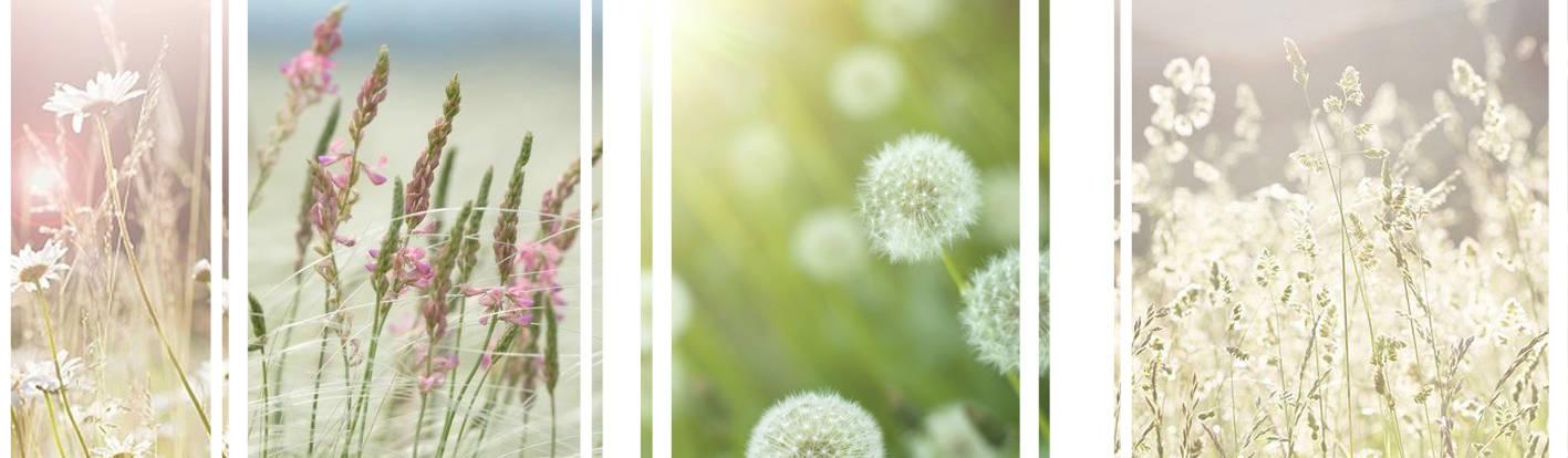 Trifolium LAA