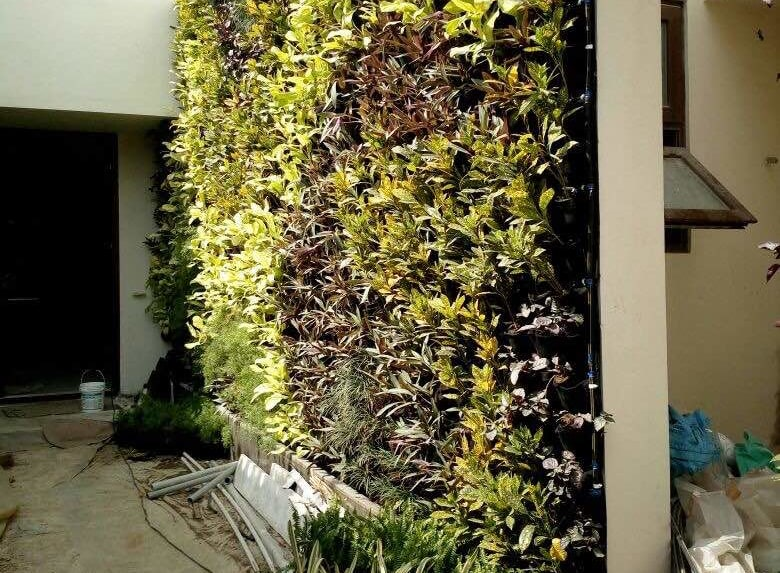 Vertical Gardens, Lifewall