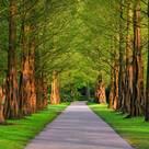Westbury Tree Services