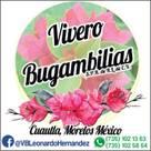 <q class='-first'>vivero bugambilias</q>