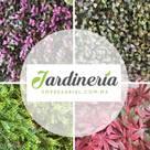 JARDINERIA EMPRESARIAL.COM.MX