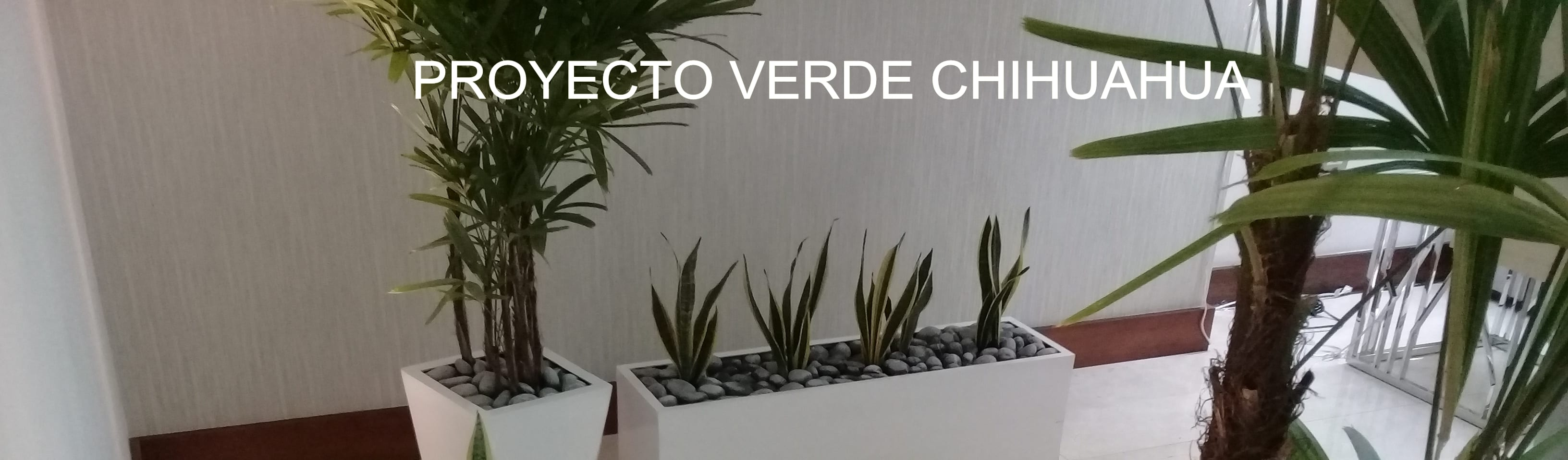 PROYECTO VERDE CHIHUAHUA