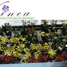 vinca ecosistemas verticales de Querétaro