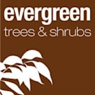 Evergreen Trees & Shrubs