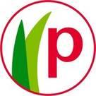 Picconia