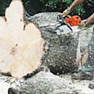 Pretoria Tree services