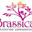 BRASSICA SOLUCIONES PAISAJISTICAS S.A.S.