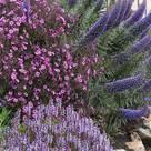 Enchanting Gardens
