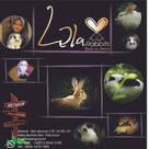 Lela rabbits