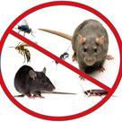 Pest Control Pretoria