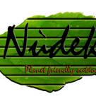 Nudek