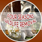 Four Seasons Wildlife Removal—Raccoon Removal Toronto
