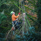 Gold Coast Tree Service