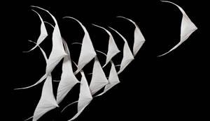 poisson anges par charlot cie homify. Black Bedroom Furniture Sets. Home Design Ideas